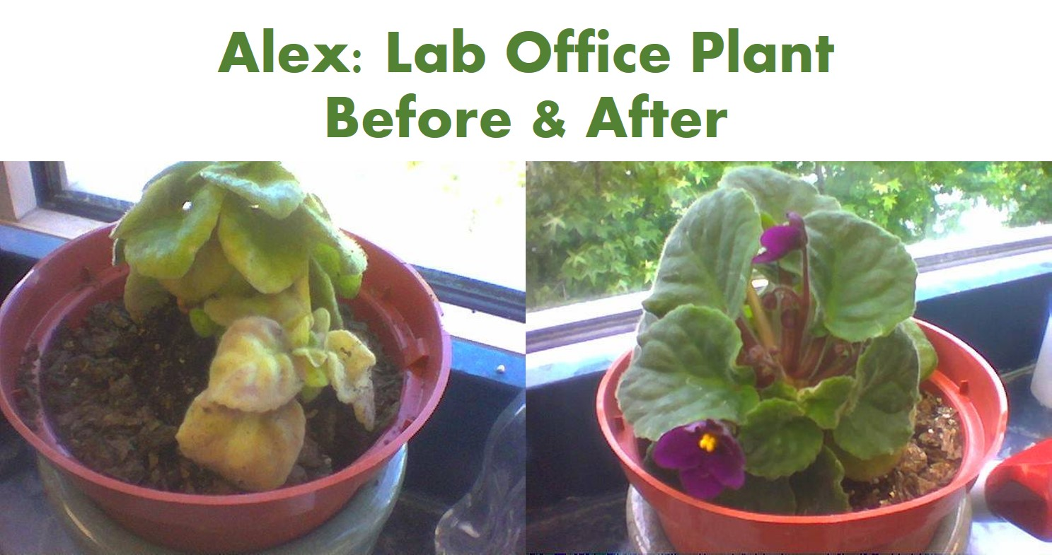 Alex_before_after