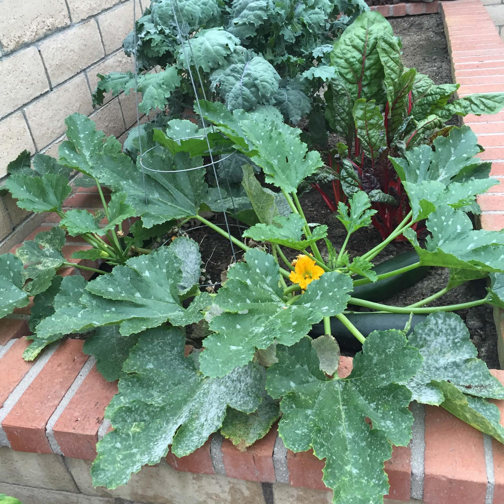 Clarice_Veggies Post Compost