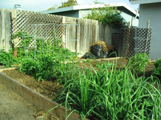 Pat_more early garden